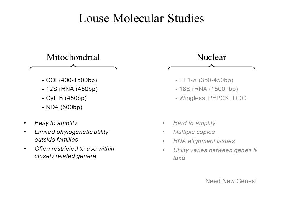 Louse Molecular Studies Nuclear - EF1- (350-450bp) - 18S rRNA (1500+bp) - Wingless, PEPCK, DDC Hard to amplify Multiple copies RNA alignment issues Ut