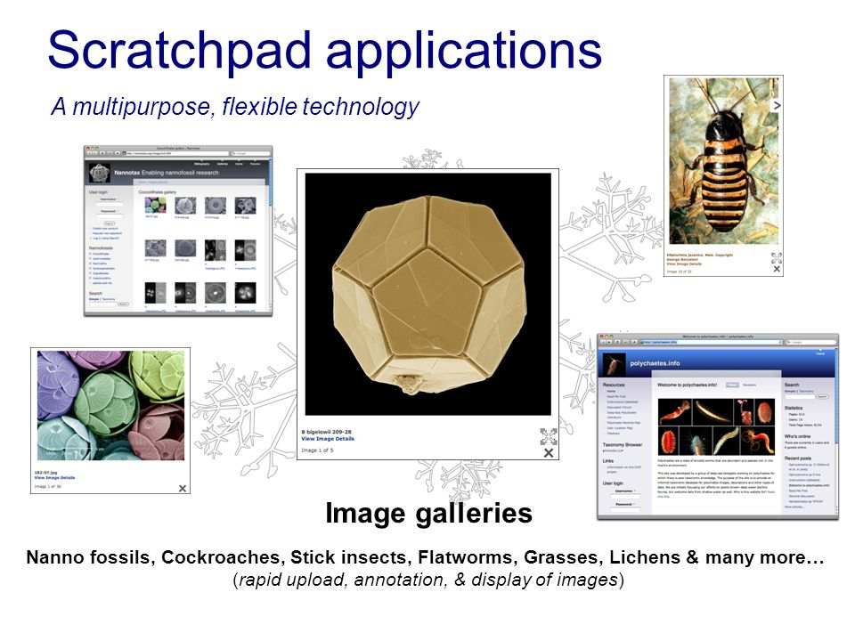 Scratchpad applications Image galleries A multipurpose, flexible technology Nanno fossils, Cockroaches, Stick insects, Flatworms, Grasses, Lichens & m