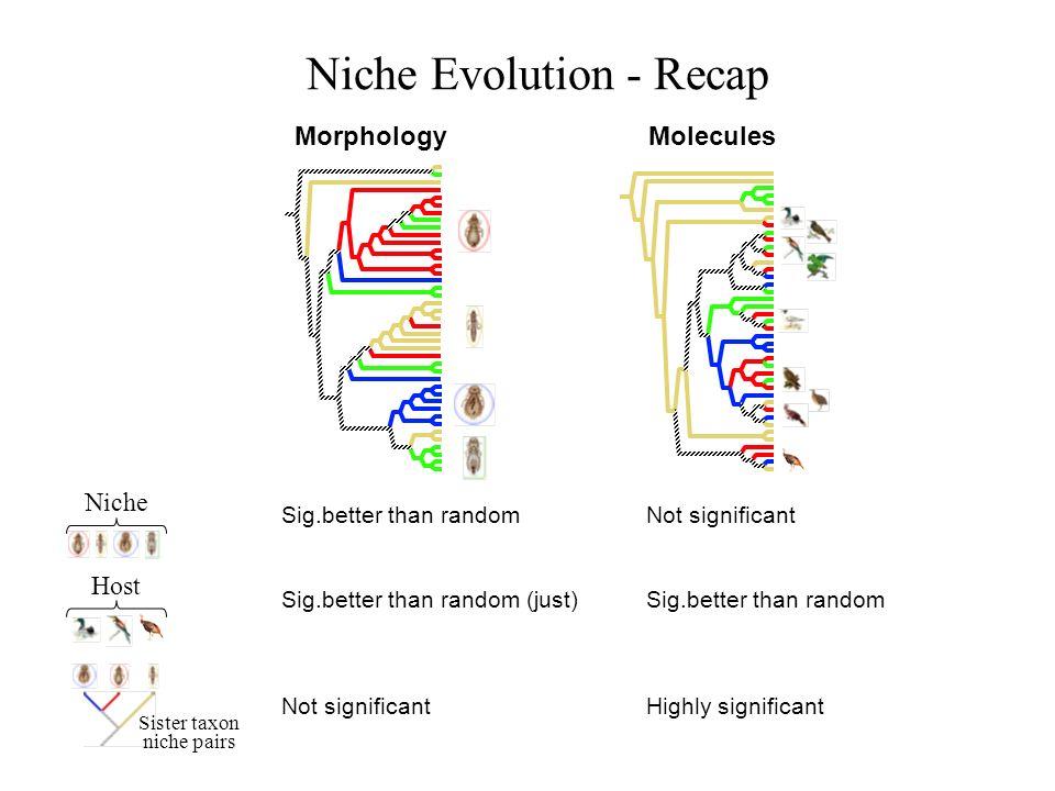 Niche Evolution - Recap MorphologyMolecules Sig.better than random Niche Not significant Host Sig.better than random (just)Sig.better than random Sist
