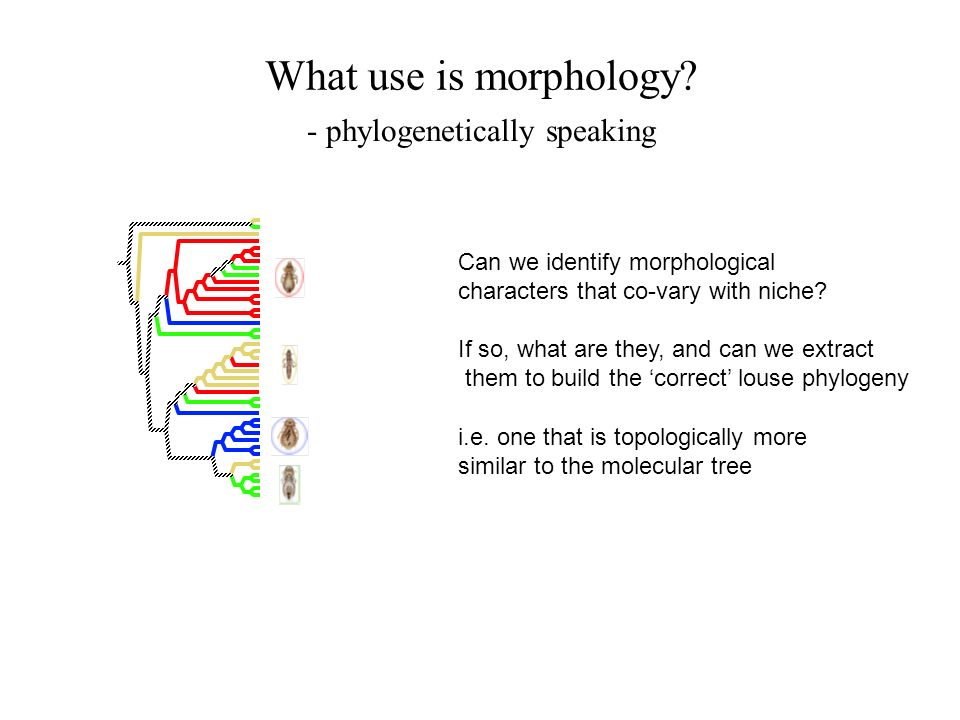 What use is morphology? Can we identify morphological characters that co-vary with niche? If so, what are they, and can we extract them to build the c
