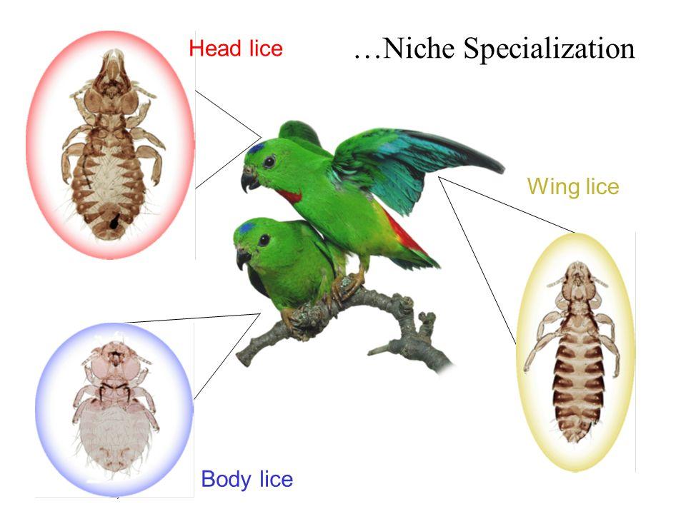 …Niche Specialization Body lice Head lice Wing lice