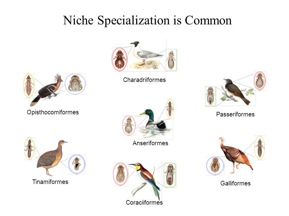 Niche Specialization is Common Opisthocomiformes Passeriformes Galliformes Tinamiformes Charadriiformes Anseriformes Coraciiformes