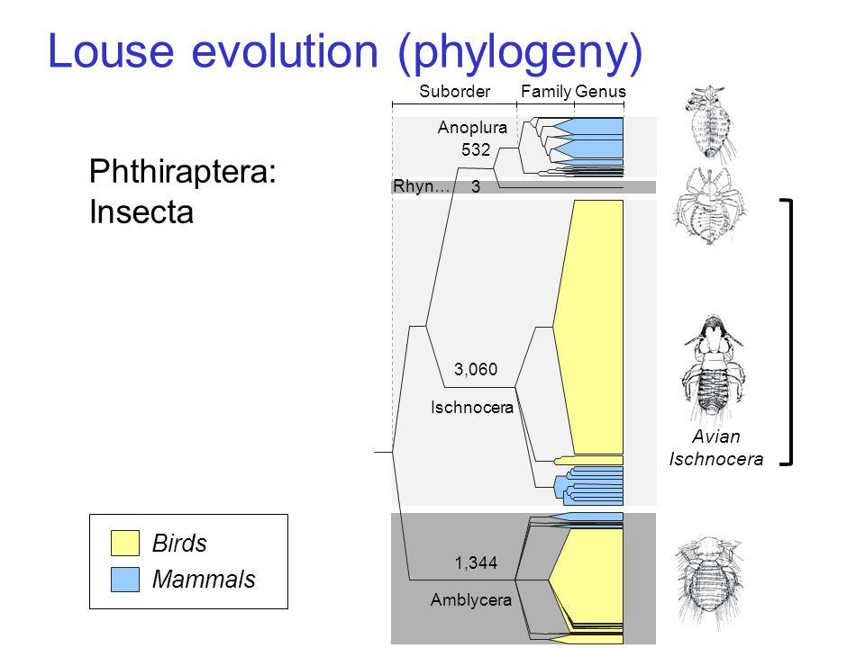 Louse evolution (phylogeny) GenusFamilySuborder 3 532 3,060 1,344 Mammals Birds Amblycera Ischnocera Rhyn… Anoplura Phthiraptera: Insecta Avian Ischnocera