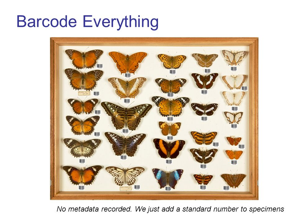 Barcode Everything No metadata recorded. We just add a standard number to specimens