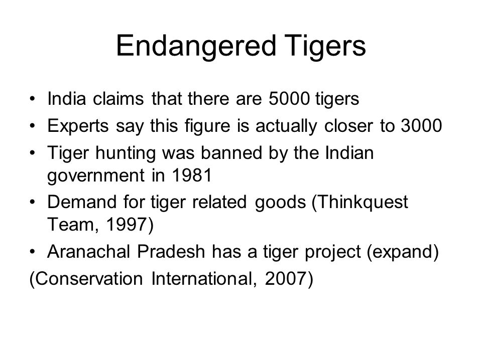 Endangered Tigers India claims that there are 5000 tigers Experts say this figure is actually closer to 3000 Tiger hunting was banned by the Indian government in 1981 Demand for tiger related goods (Thinkquest Team, 1997) Aranachal Pradesh has a tiger project (expand) (Conservation International, 2007)