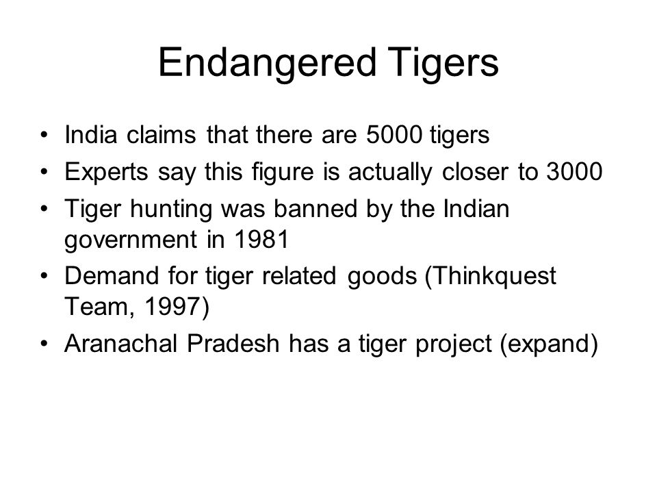 Endangered Tigers India claims that there are 5000 tigers Experts say this figure is actually closer to 3000 Tiger hunting was banned by the Indian government in 1981 Demand for tiger related goods (Thinkquest Team, 1997) Aranachal Pradesh has a tiger project (expand)