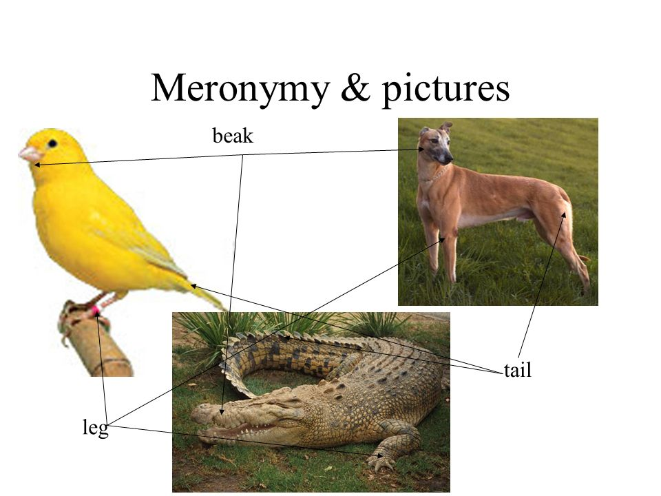 Meronymy & pictures beak tail leg