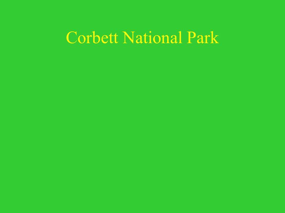 Corbett National Park