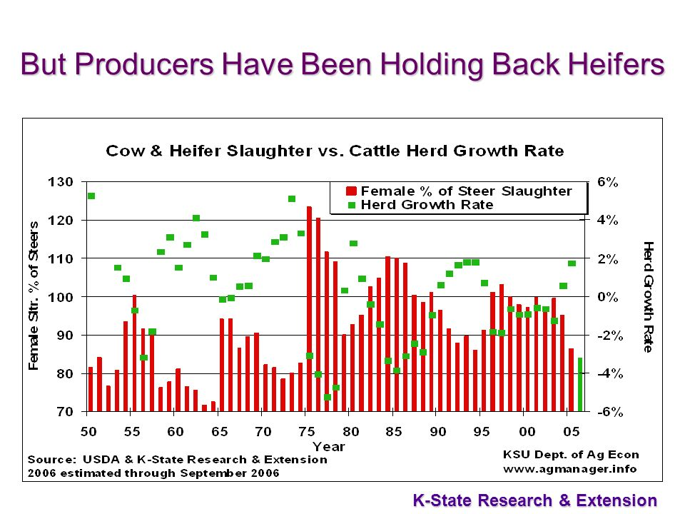 35 K-State Research & Extension But Producers Have Been Holding Back Heifers
