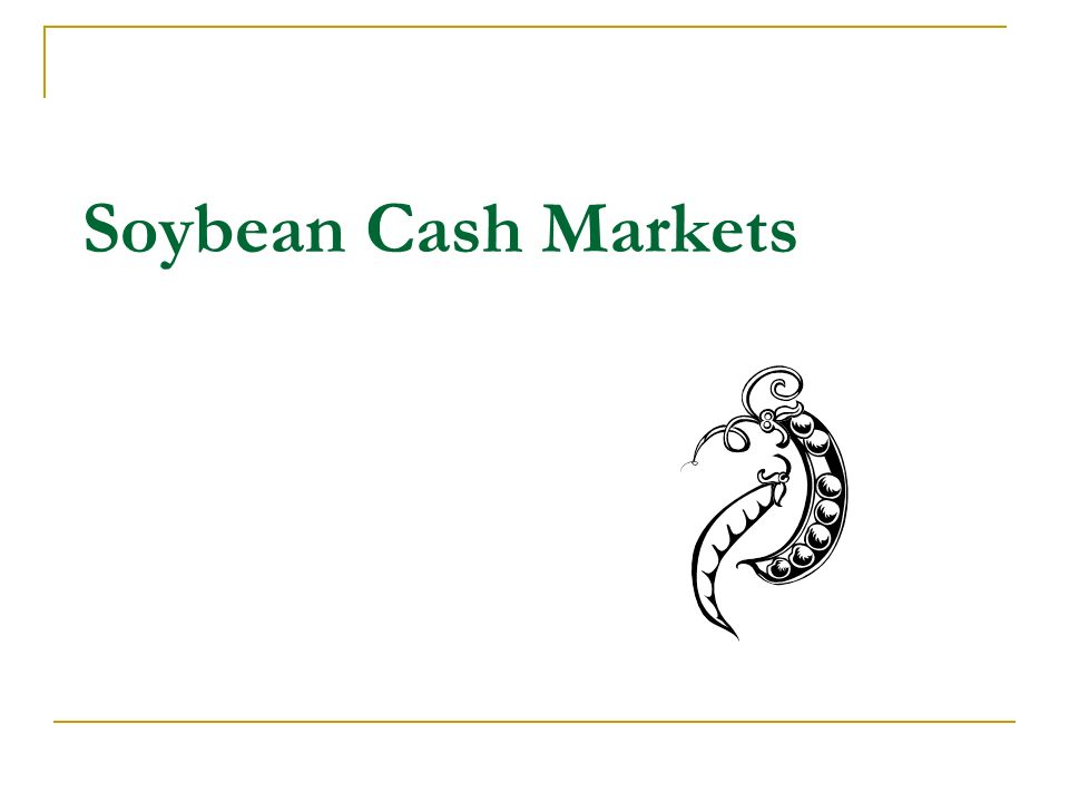 Soybean Cash Markets
