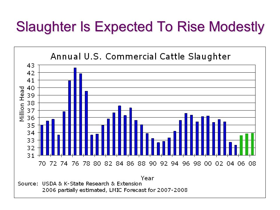 Slaughter Is Expected To Rise Modestly
