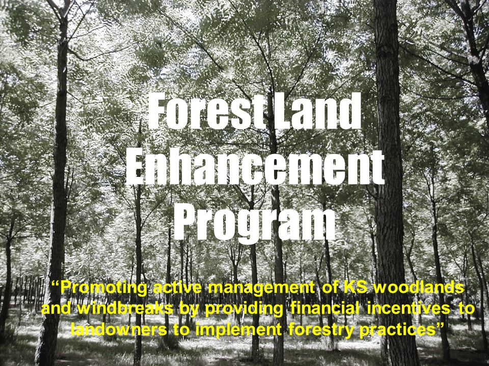 Forest Land Enhancement Program Promoting active management of KS woodlands and windbreaks by providing financial incentives to landowners to implement forestry practices