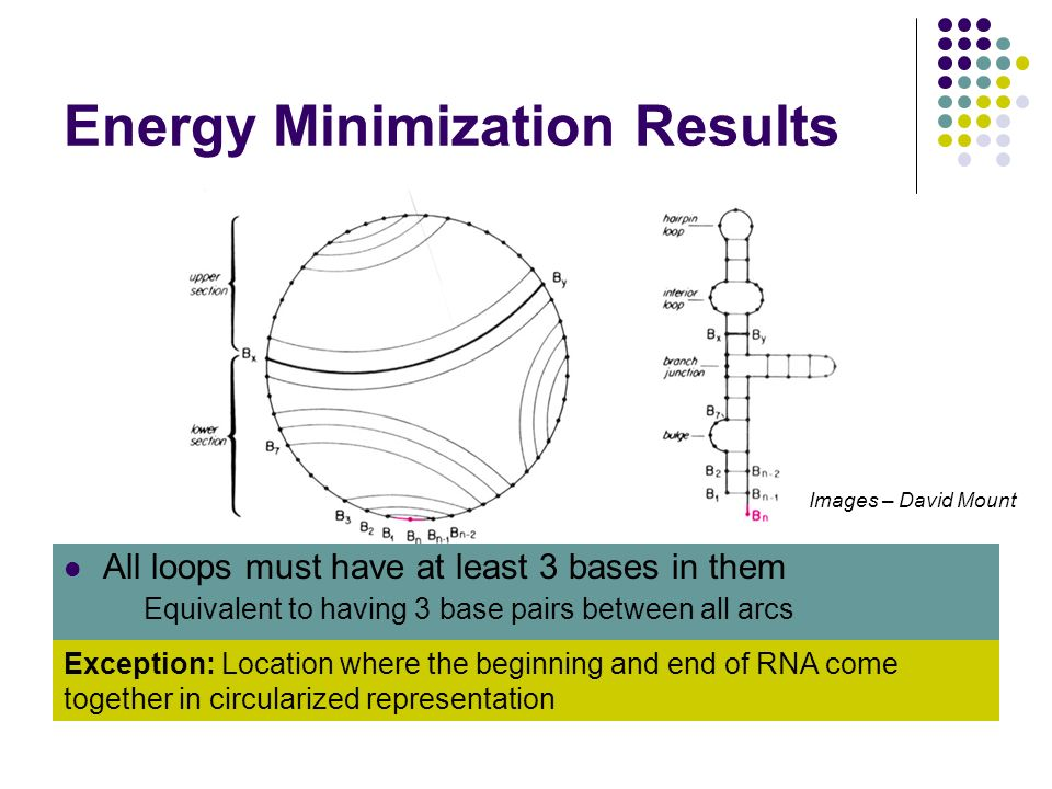 Energy Minimization Results Linear RNA strand folded back on itself to create secondary structure Circularized representation uses this requirement Ar