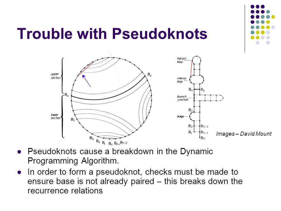 Trouble with Pseudoknots Pseudoknots cause a breakdown in the Dynamic Programming Algorithm. In order to form a pseudoknot, checks must be made to ens