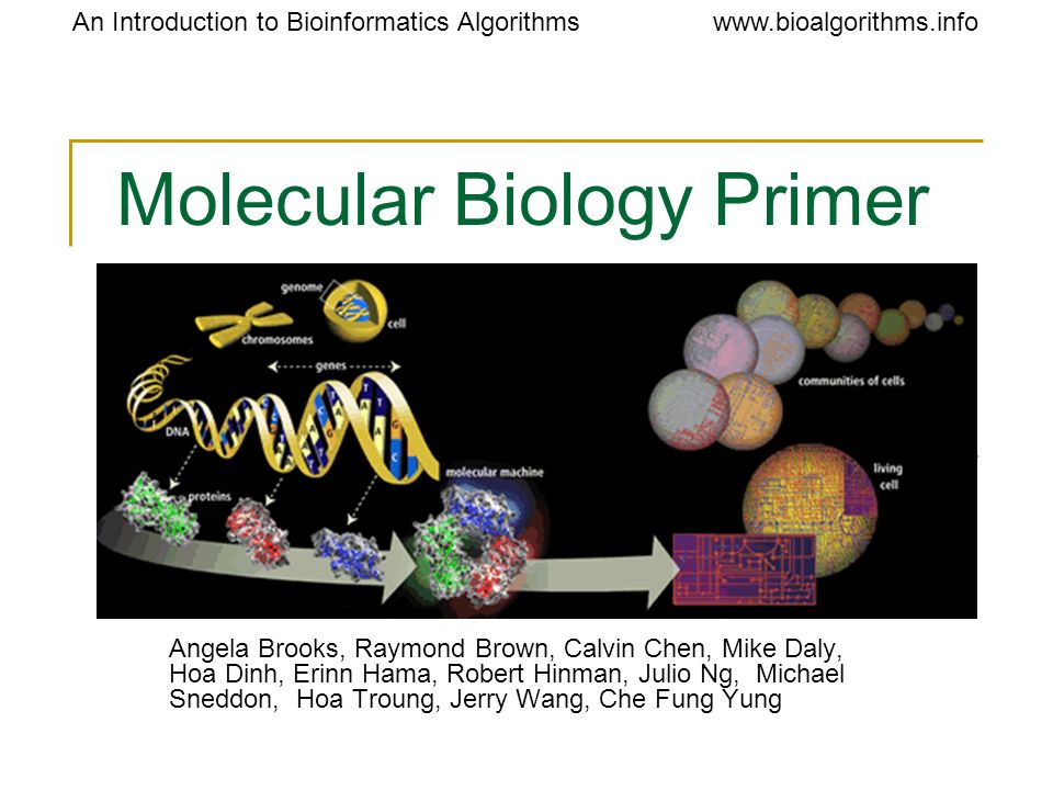 An Introduction to Bioinformatics Algorithmswww.bioalgorithms.info DNA: The Basis of Life Humans have about 3 billion base pairs.