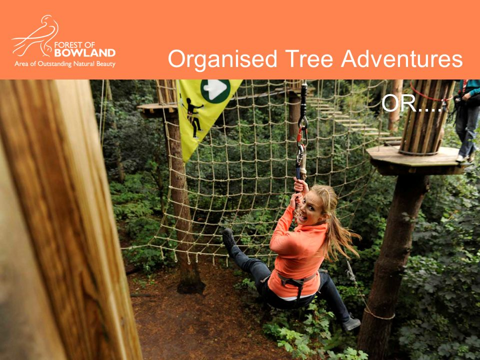 Organised Tree Adventures OR....