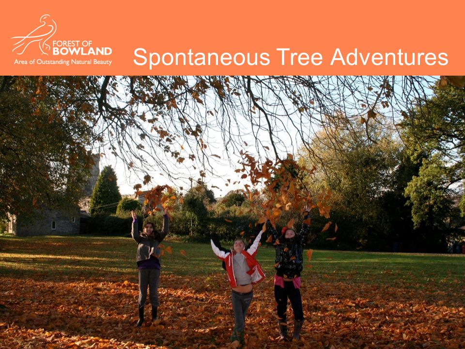 Spontaneous Tree Adventures