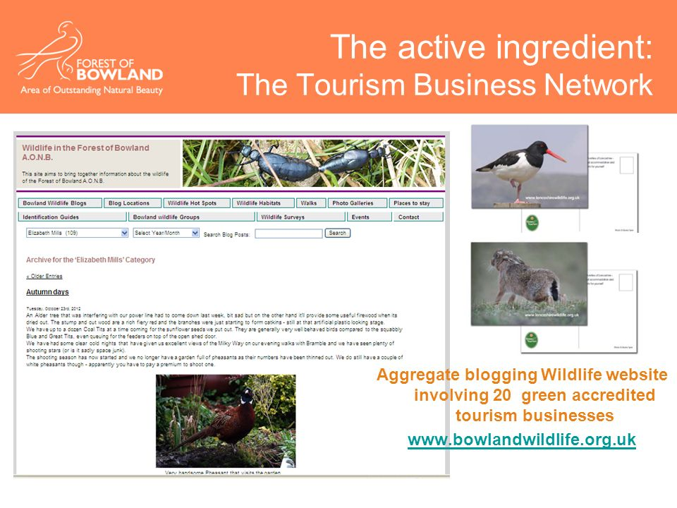 The active ingredient: The Tourism Business Network Aggregate blogging Wildlife website involving 20 green accredited tourism businesses www.bowlandwildlife.org.uk