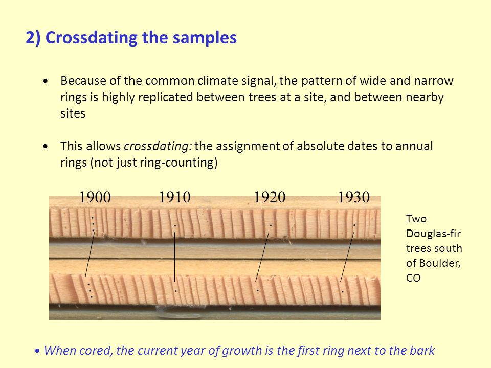 2) Crossdating the samples Because of the common climate signal, the pattern of wide and narrow rings is highly replicated between trees at a site, and between nearby sites This allows crossdating: the assignment of absolute dates to annual rings (not just ring-counting) 1900191019201930 Two Douglas-fir trees south of Boulder, CO When cored, the current year of growth is the first ring next to the bark