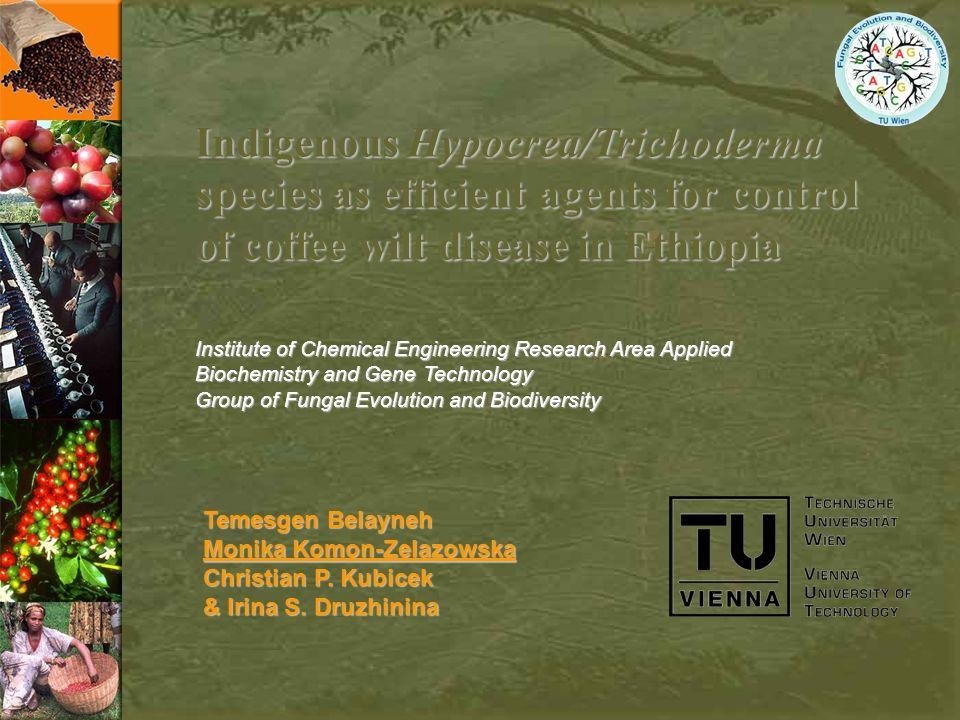 Temesgen Belayneh Monika Komon-Zelazowska Christian P. Kubicek & Irina S. Druzhinina Indigenous Hypocrea/Trichoderma species as efficient agents for c