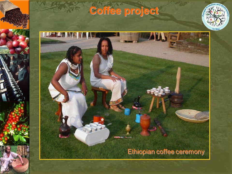 Coffee project Ethiopian coffee ceremony