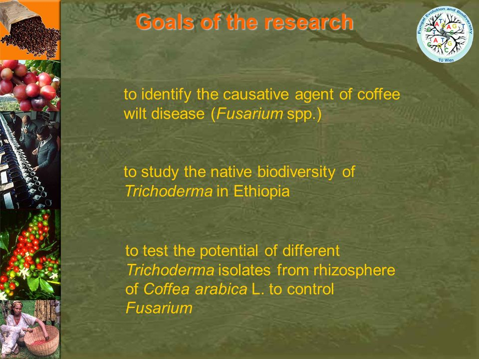 Goals of the research to study the native biodiversity of Trichoderma in Ethiopia to identify the causative agent of coffee wilt disease (Fusarium spp