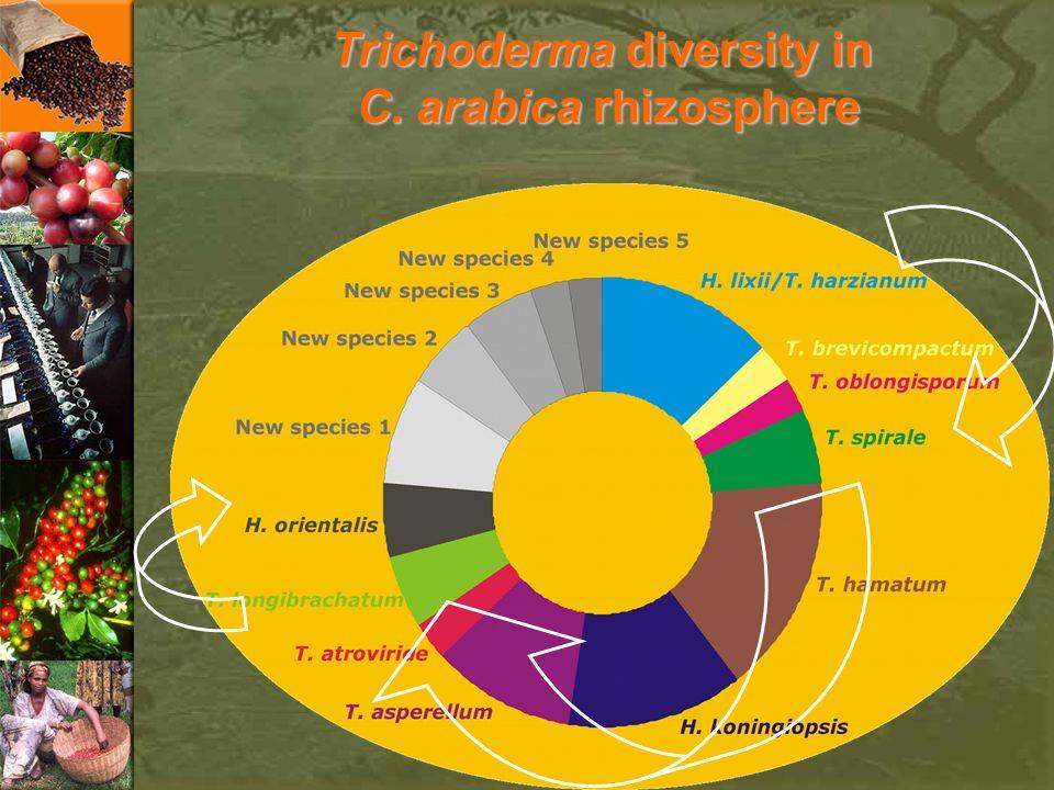 Trichoderma diversity in C. arabica rhizosphere