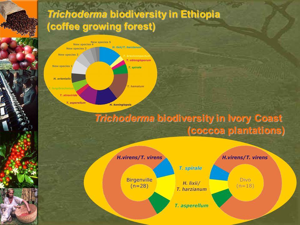 Trichoderma biodiversity in Ethiopia (coffee growing forest) Trichoderma biodiversity in Ivory Coast (coccoa plantations)