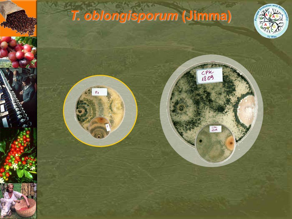 T. oblongisporum (Jimma)