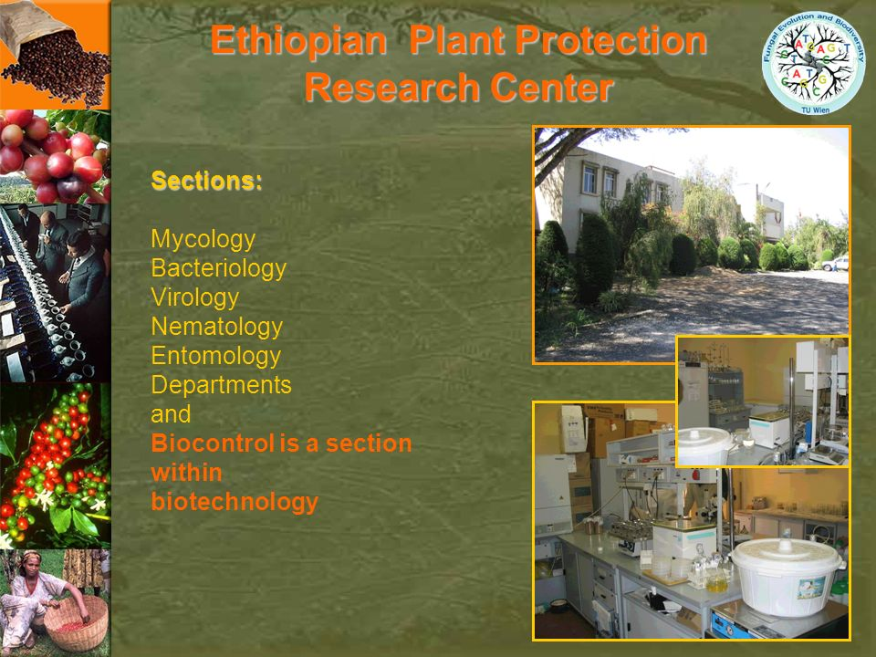Sections: Mycology Bacteriology Virology Nematology Entomology Departments and Biocontrol is a section within biotechnology Ethiopian Plant Protection