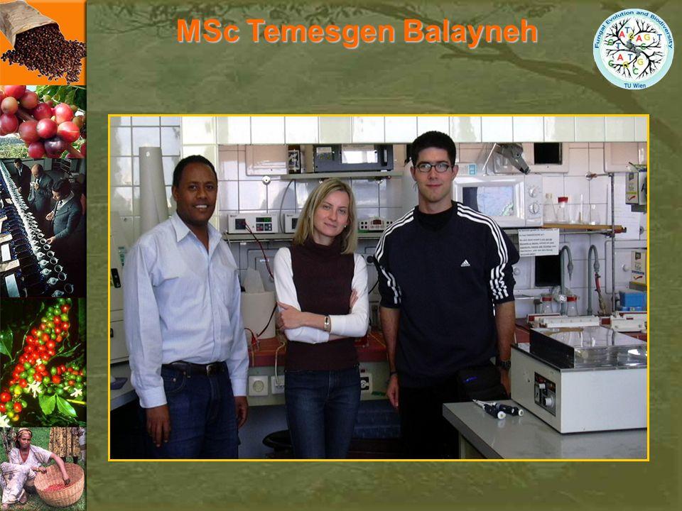 MSc Temesgen Balayneh