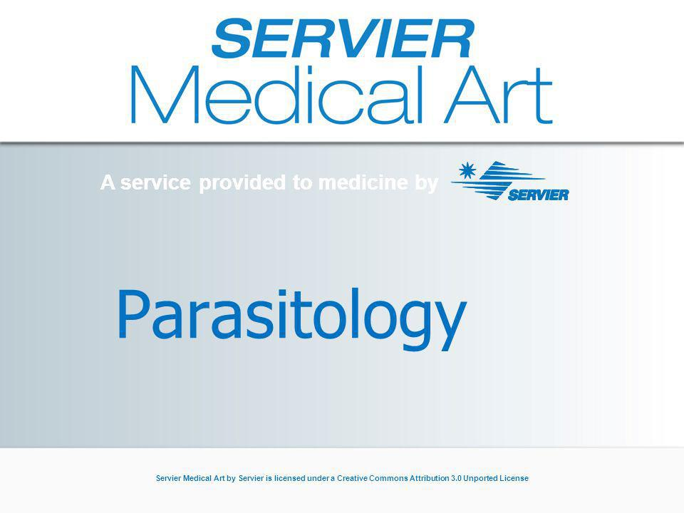 A service provided to medicine by Servier Medical Art by Servier is licensed under a Creative Commons Attribution 3.0 Unported License Parasitology A service provided to medicine by