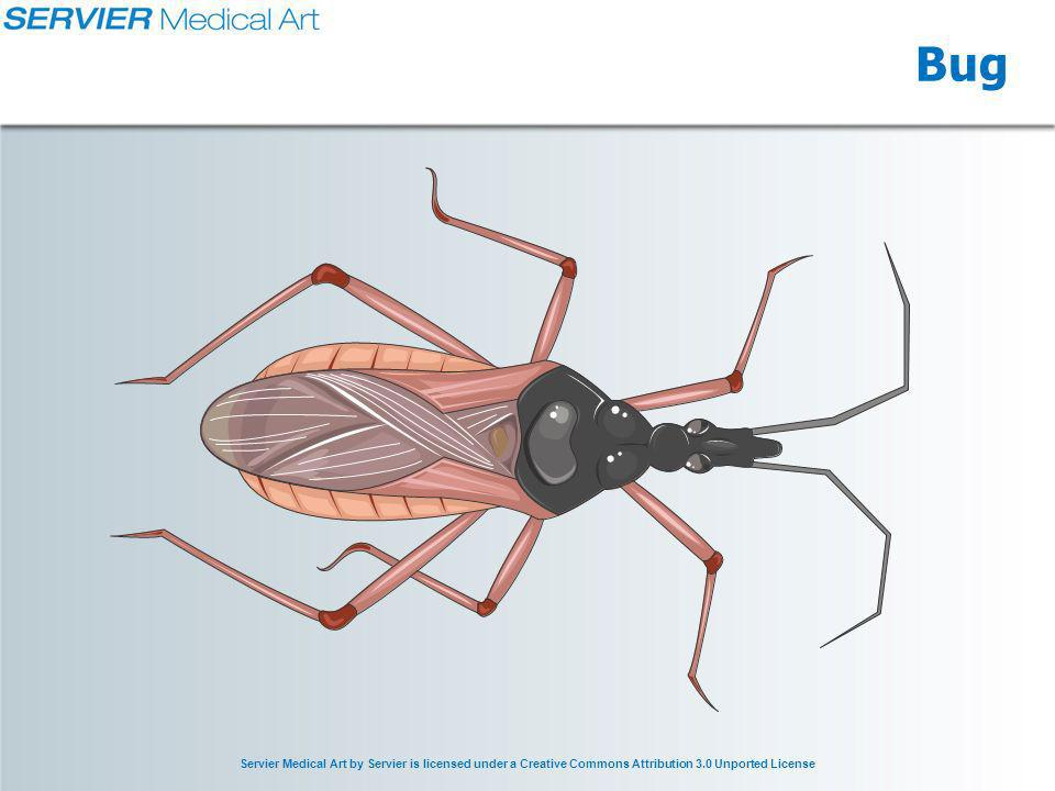 Servier Medical Art by Servier is licensed under a Creative Commons Attribution 3.0 Unported License Bug