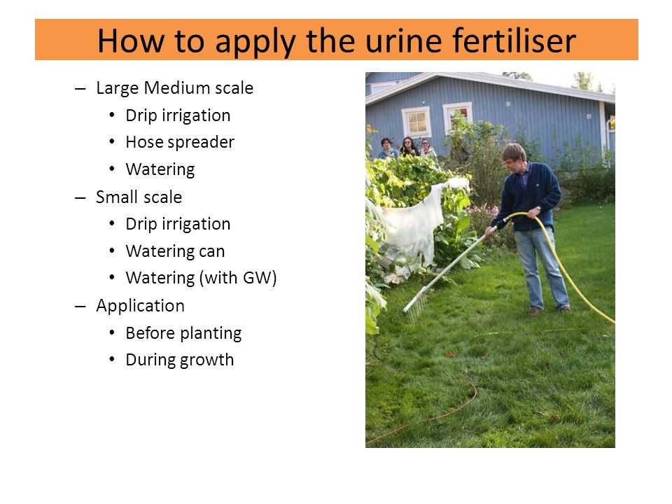 How to apply the urine fertiliser – Large Medium scale Drip irrigation Hose spreader Watering – Small scale Drip irrigation Watering can Watering (with GW) – Application Before planting During growth