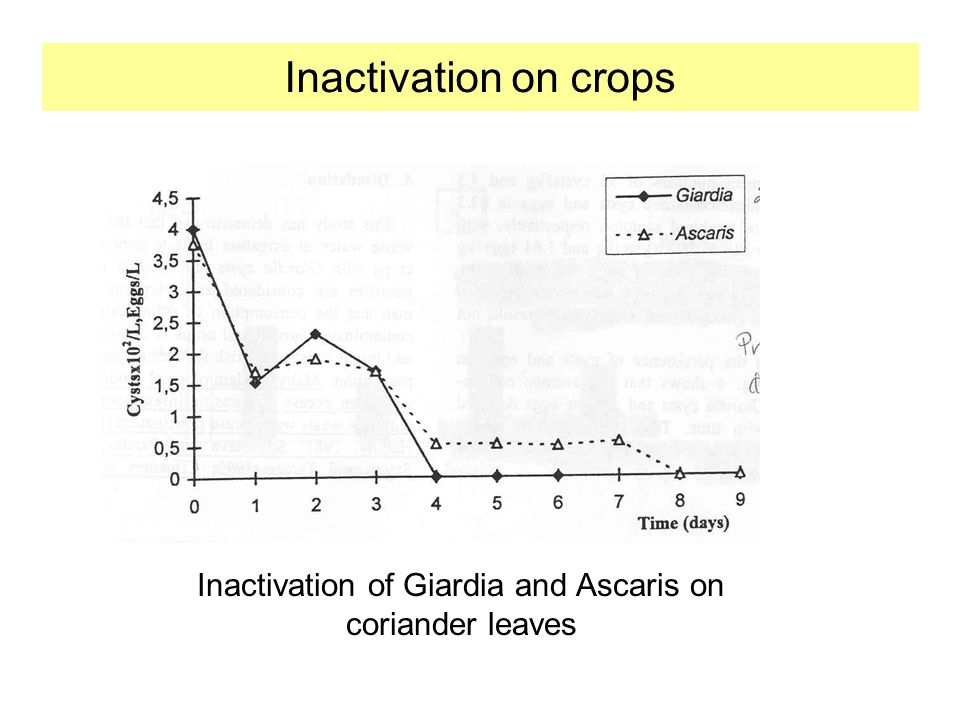 Inactivation of Giardia and Ascaris on coriander leaves Inactivation on crops