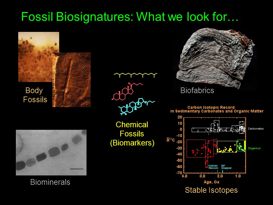 Body Fossils Biominerals Biofabrics Chemical Fossils (Biomarkers) Stable Isotopes Fossil Biosignatures: What we look for…