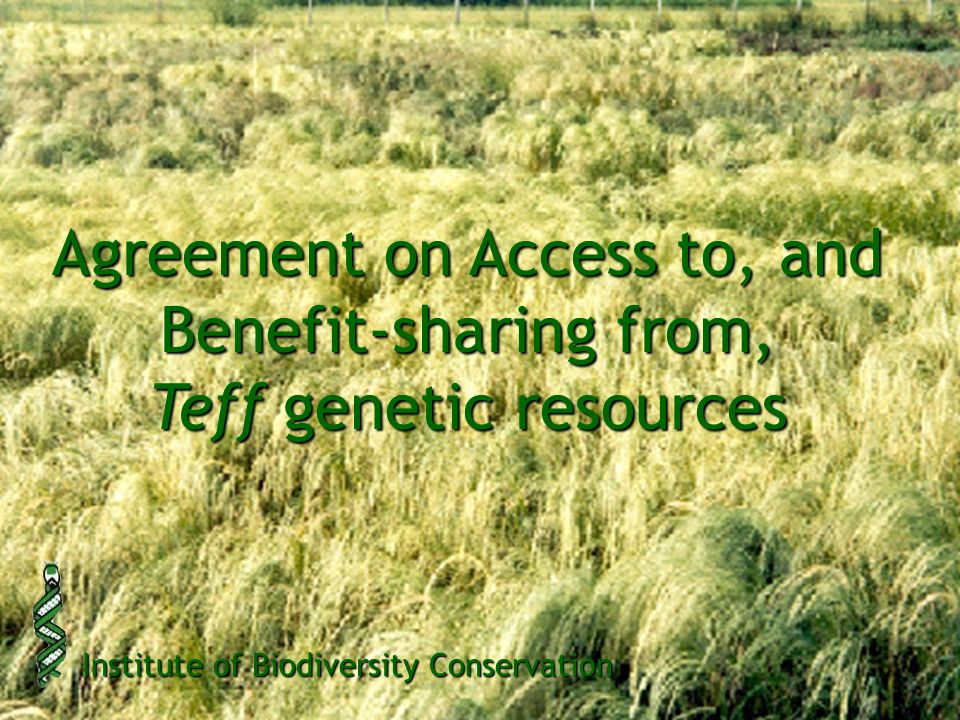 Agreement on Access to, and Benefit-sharing from, Teff genetic resources Institute of Biodiversity Conservation