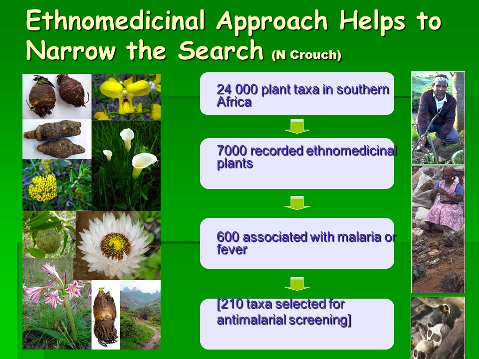 Plant Selection Procedure Ethnomedicinal Chemosystematic Other Develop novel drugs from PLANTS Note: Data sourced by literature searching (N Crouch)
