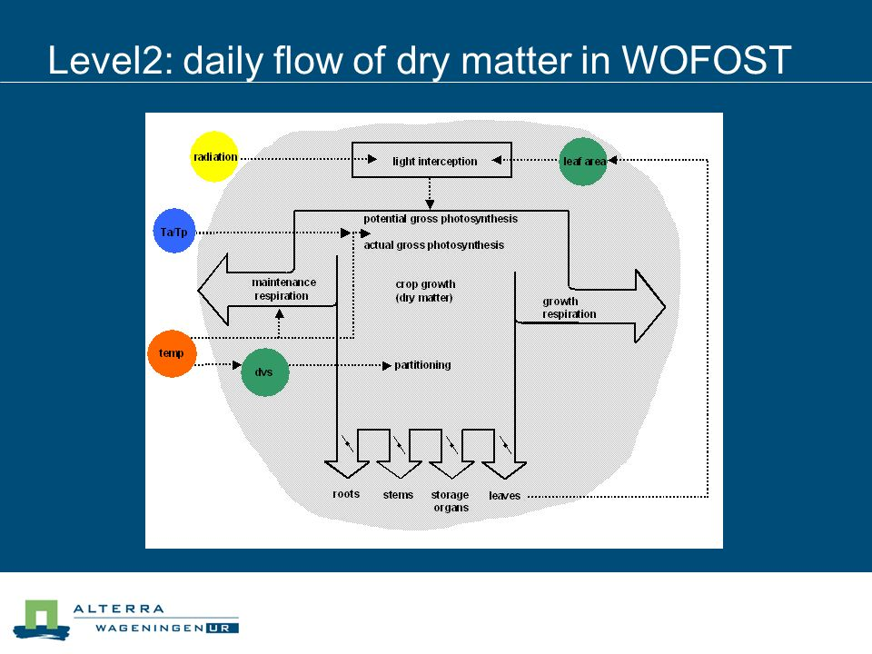 Level2: daily flow of dry matter in WOFOST