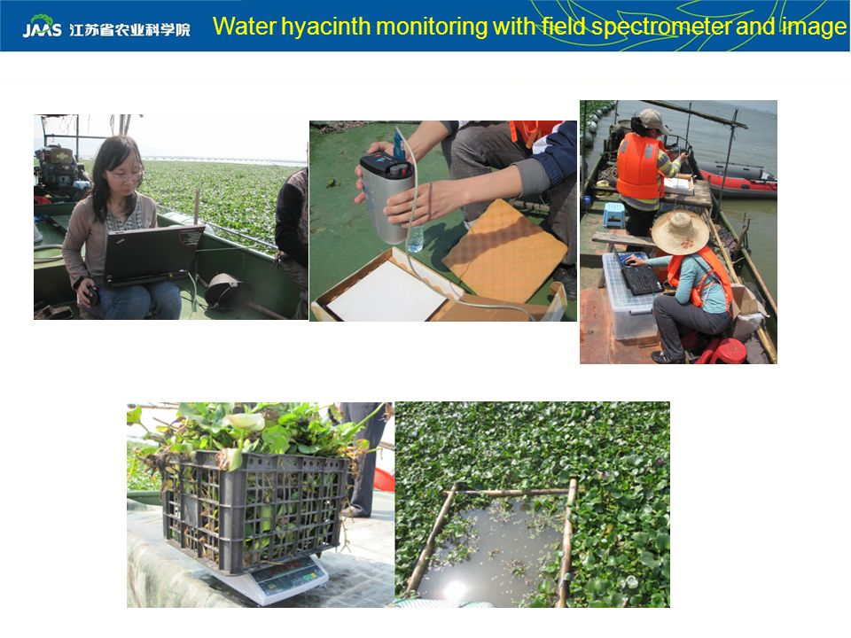 Water hyacinth monitoring with field spectrometer and image