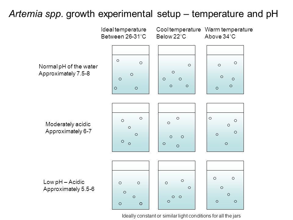 Artemia spp. growth experimental setup – temperature and pH Normal pH of the water Approximately 7.5-8 Low pH – Acidic Approximately 5.5-6 Moderately