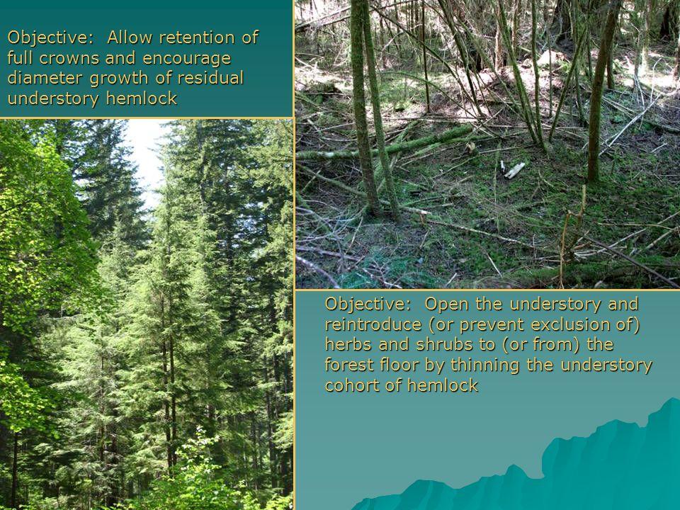 Hemlockcarpets? Hemlock carpets? Recalcitrant understories? Objective: Develop terrestrial habitat in a twice-commercial-thinned stand of Douglas-fir