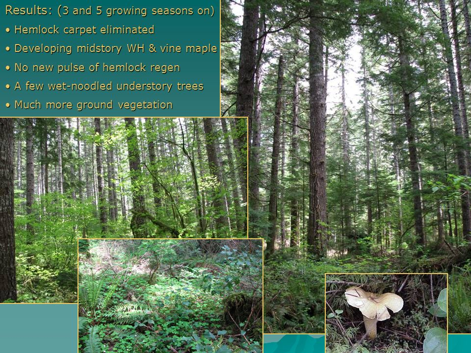 Potential problems: Prescription not understood: Prescription not understood: All understory trees removed Shrubs inadvertently cut Slash Slash Wet no