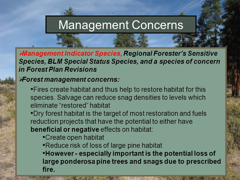 Management Concerns Management Indicator Species, Regional Foresters Sensitive Species, BLM Special Status Species, and a species of concern in Forest