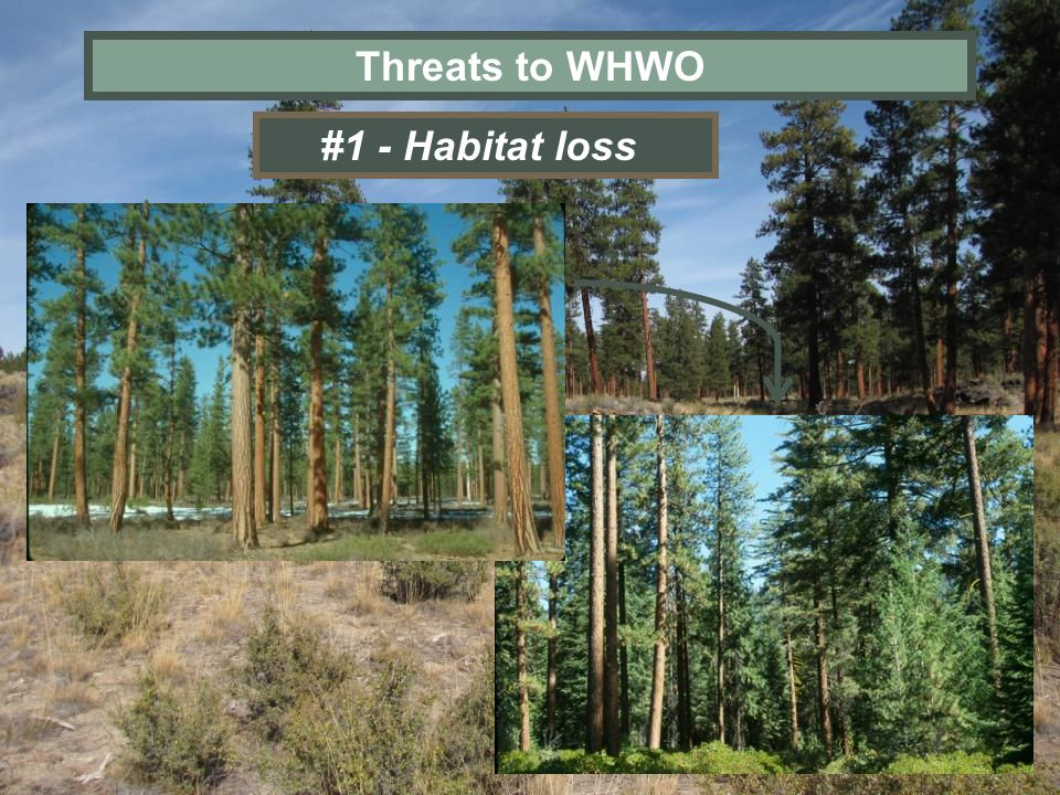 Threats to WHWO #1 - Habitat loss