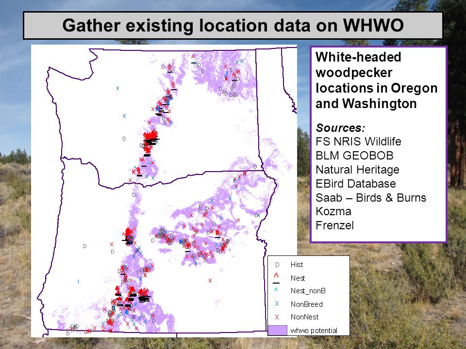 White-headed woodpecker locations in Oregon and Washington Sources: FS NRIS Wildlife BLM GEOBOB Natural Heritage EBird Database Saab – Birds & Burns K