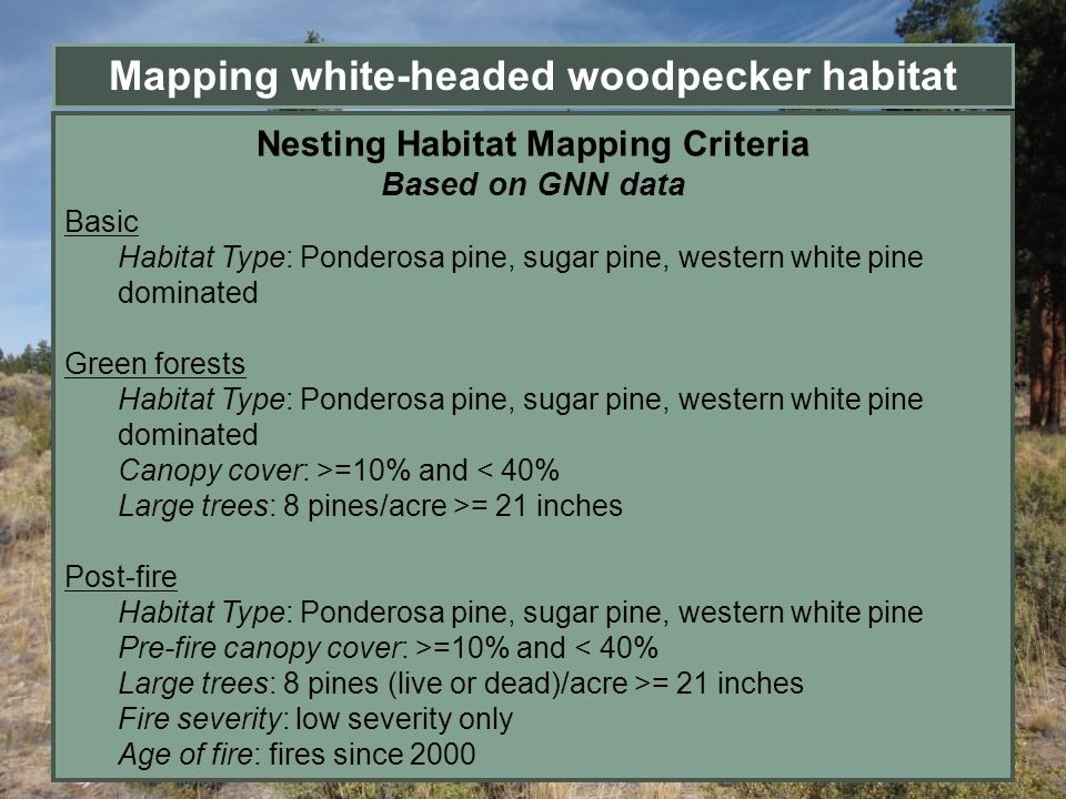 Mapping white-headed woodpecker habitat Nesting Habitat Mapping Criteria Based on GNN data Basic Habitat Type: Ponderosa pine, sugar pine, western whi