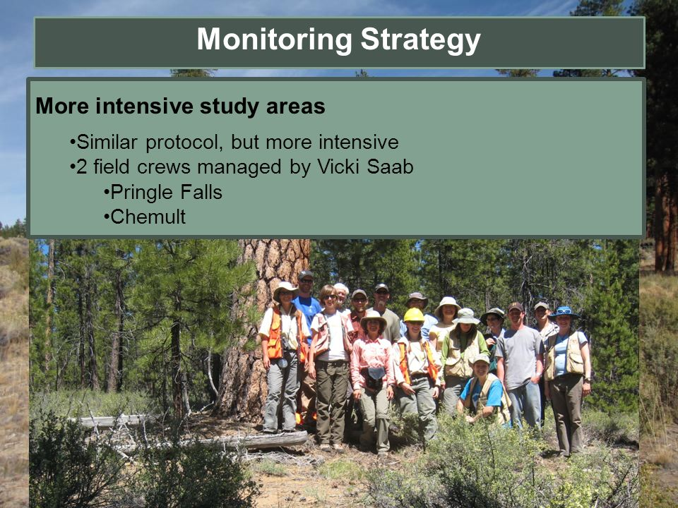More intensive study areas Similar protocol, but more intensive 2 field crews managed by Vicki Saab Pringle Falls Chemult Monitoring Strategy