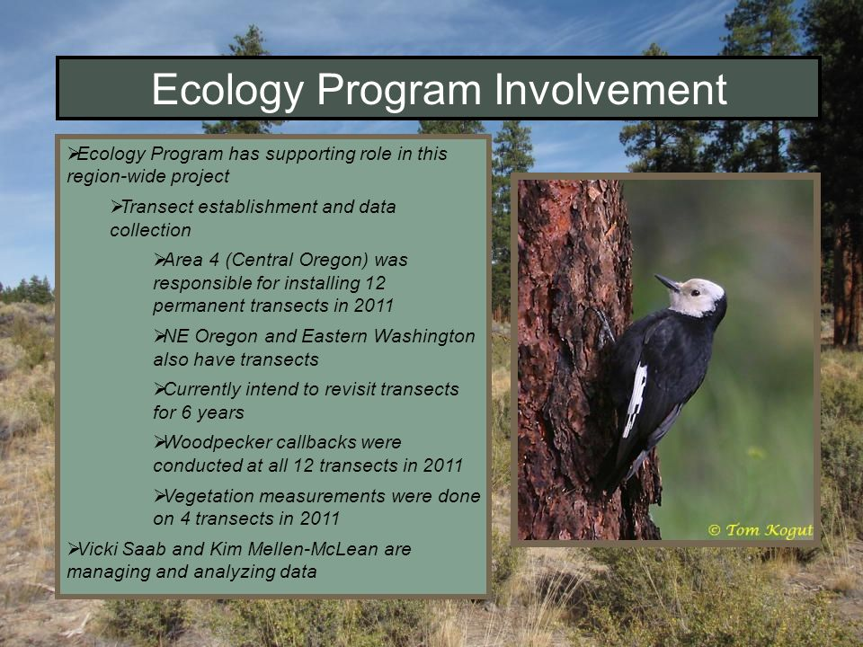 Ecology Program Involvement Ecology Program has supporting role in this region-wide project Transect establishment and data collection Area 4 (Central