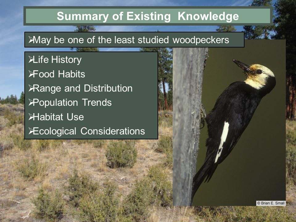 Summary of Existing Knowledge Life History Food Habits Range and Distribution Population Trends Habitat Use Ecological Considerations May be one of th